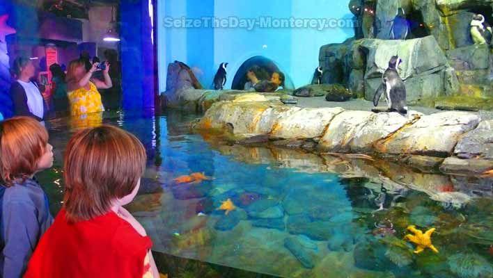 30 best Monterey Bay Aquarium images on Pinterest ...