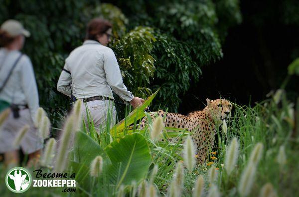Zoo Keeper Job