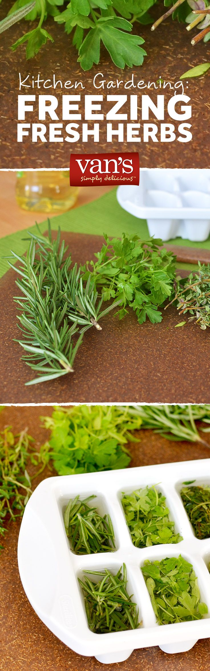 Kitchen Gardening: Looking for a long-term fix for fresh herbs? Freeze them into olive oil cubes for later use!
