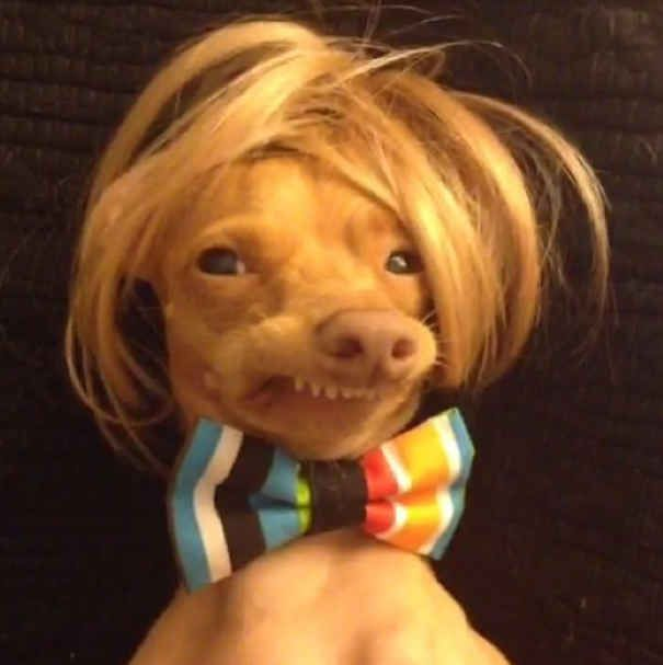 Why Tuna Is The Most Inspiring Dog On The Internet