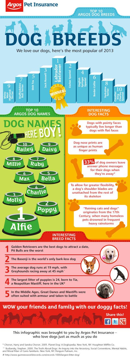 Have you ever wondered what the top dog names and breeds are? Find out what the most popular were in 2013 by reading our infographic which is also filled with interesting facts! - See more at: http://www.argospetinsurance.co.uk/top-dog-names-and-breeds-2013/
