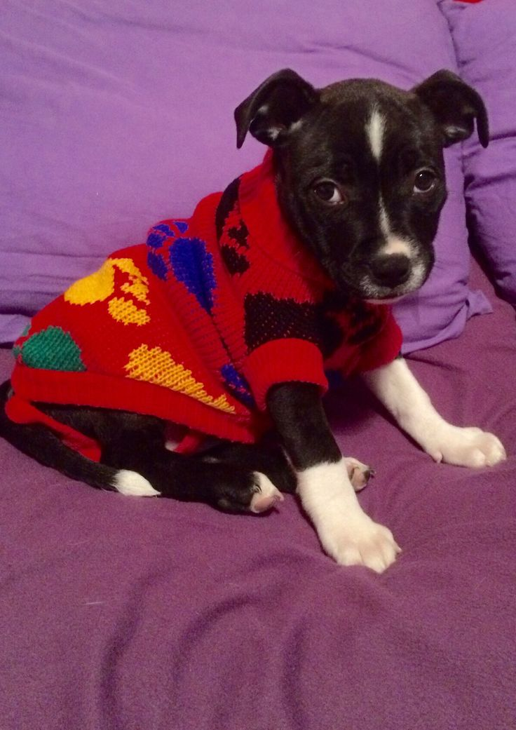 Fed up pup modelling the new sweater for her first freezing cold early May bank holiday camping weekend 2016.