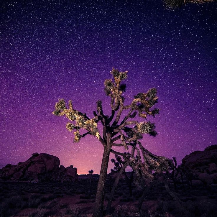 Went to LA the day of the Oscars for a star party. Joshua Tree National Park [OC] [10801080] #reddit