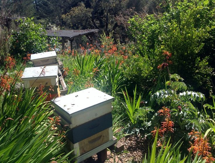 332 best Sustainable Gardening \ Permaculture images on Pinterest - sustainable garden design