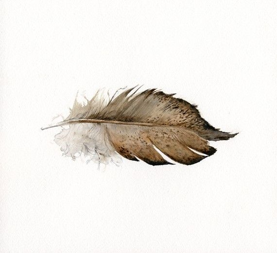 feather art  Gold Laced Wyandotte Feather print by amberalexander, $20.00