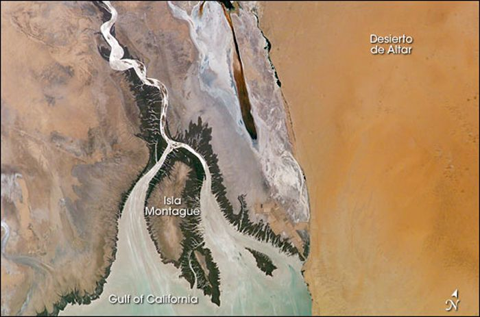 The Colorado River Delta, where the waterway empties into the Gulf of California in Mexico, as seen by an astronaut aboard the International Space Station on June 2, 2004.