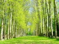 Versaille, France- Famous white birch tree canopy, Lakes & gardens give this estate a romantic french feel.. Live lusciously with LUSCIOUS: www.myLusciousLif...