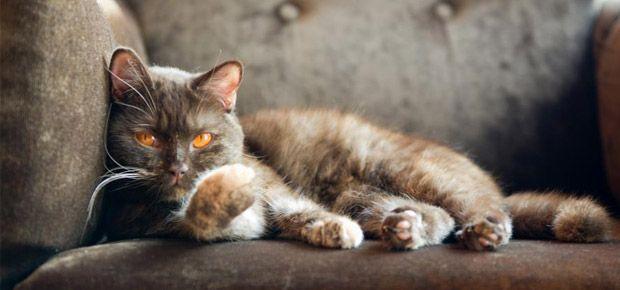 mon chat urine partout que faire conseils sur les chats advice cat pinterest. Black Bedroom Furniture Sets. Home Design Ideas
