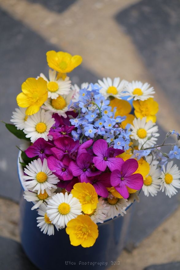 Bellissimi fiori di campo...