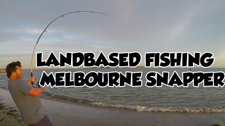 Landbased Shark Fishing Gummies & Melbourne Snapper Port Phiilip Bay  & ...