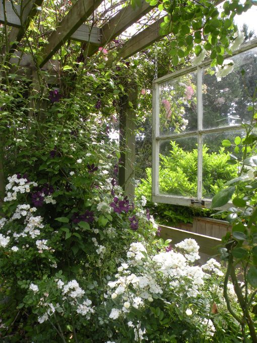 88 Best Pnw Gardening Images On Pinterest The Pacific