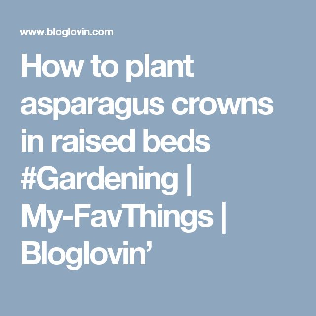 How to plant asparagus crowns in raised beds #Gardening | My-FavThings | Bloglovin'