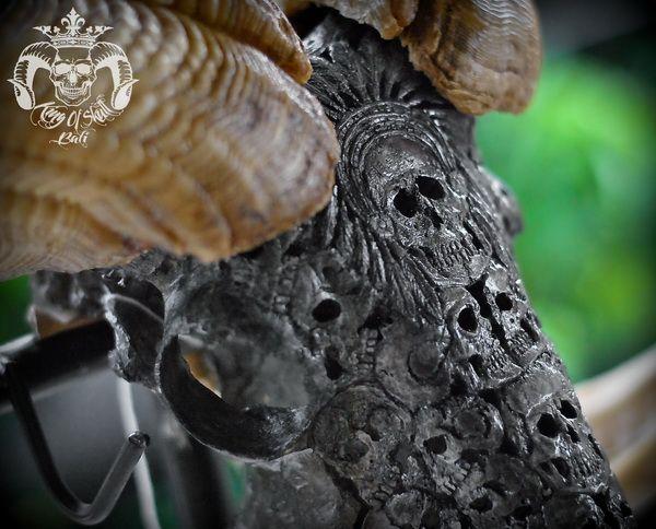 Vintage Taxidermy Hand Carved Indian Skulls in Black Finish XXL Indonesian Ram Skull