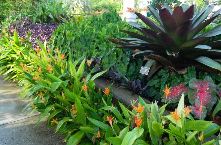Brazilian Garden Naples Botanical Garden bromeliad bed by garden muses-a Toronto gardening blog
