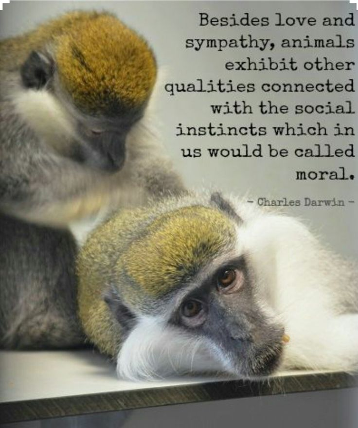 Pinterest Animal Quotes: 106 Best Animal Quotes And Animals Lovers' Quotes Images