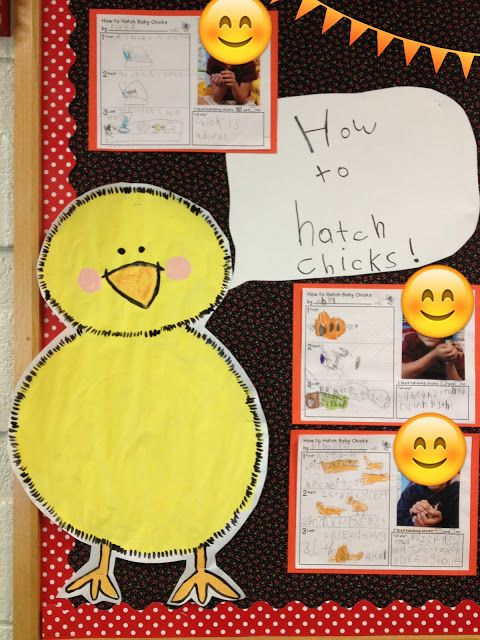 "Little Bird Kindergarten: ""How to hatch chicks"" Life Cycle of a Chicken, everything you need including close reading with writing extensions!"