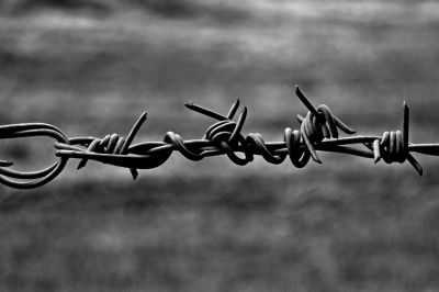 Bouquet Barbed Wire Monochrome Black and White Photograph