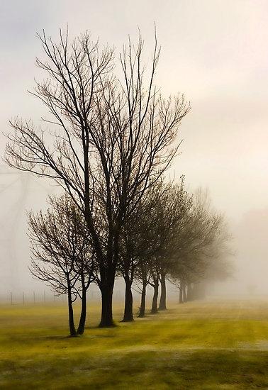 Maryvale Mist by Angie Muccillo. Latrobe Valley, Victoria Australia