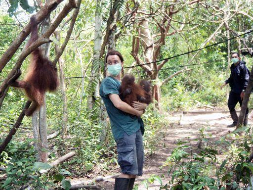 Training: Veterinarian Karmele Llano Sánchez from Spain holds orangutans Rocky and Rickina.  http://redapes.org/rickina