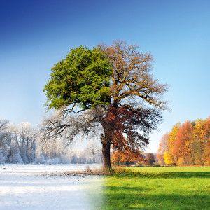 Skleněný obraz 4 Seasons, 50x50 cm