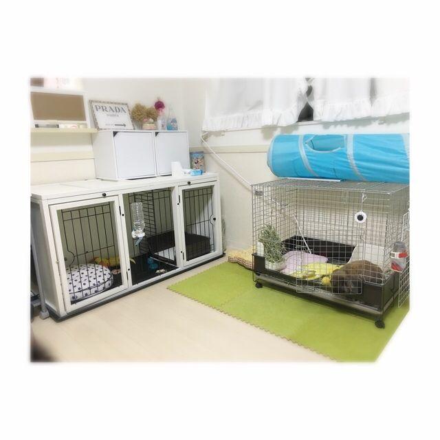 Kanaeさんの、犬,加湿器フル稼働,うさぎと暮らす,チワワ,うさぎ,一人暮らし,ドライフラワー,タイルカーペット,ケージ,リビング,のお部屋写真