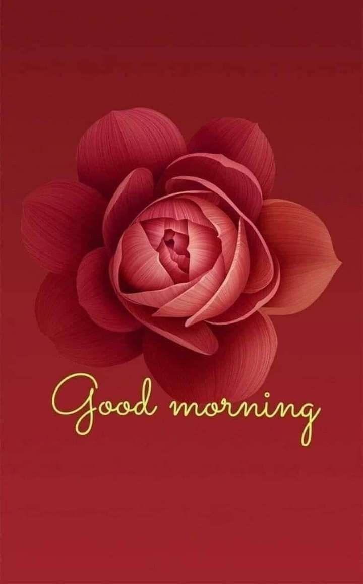 Good Morning Greetings   Good morning greetings, Good morning gif ...