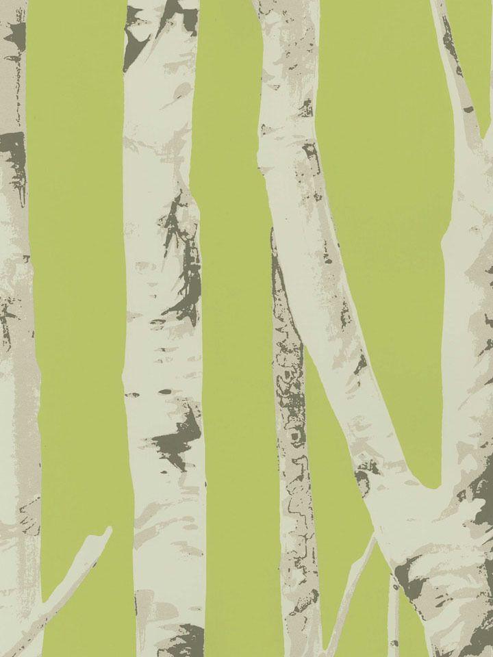 Kiwi Winter Birch Trees Wallpaper