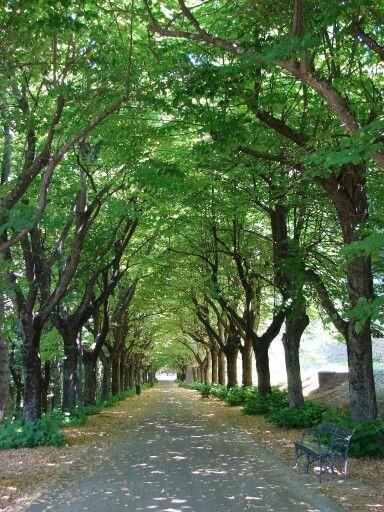 Entrada a saludecio, Italia. ( provincia de Rimini )
