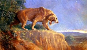The saber-toothed cat (Smilodon sp.). Image credit: Charles R. Knight.