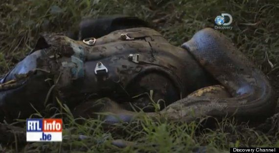 Eaten Alive – Paul Rosolie Got Swallowed By A Giant Anaconda On The Discovery Channel