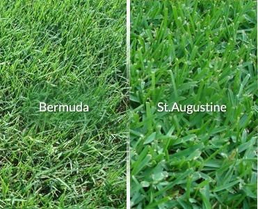 Mow At The Proper Height To Remove Bermuda Grass From A St
