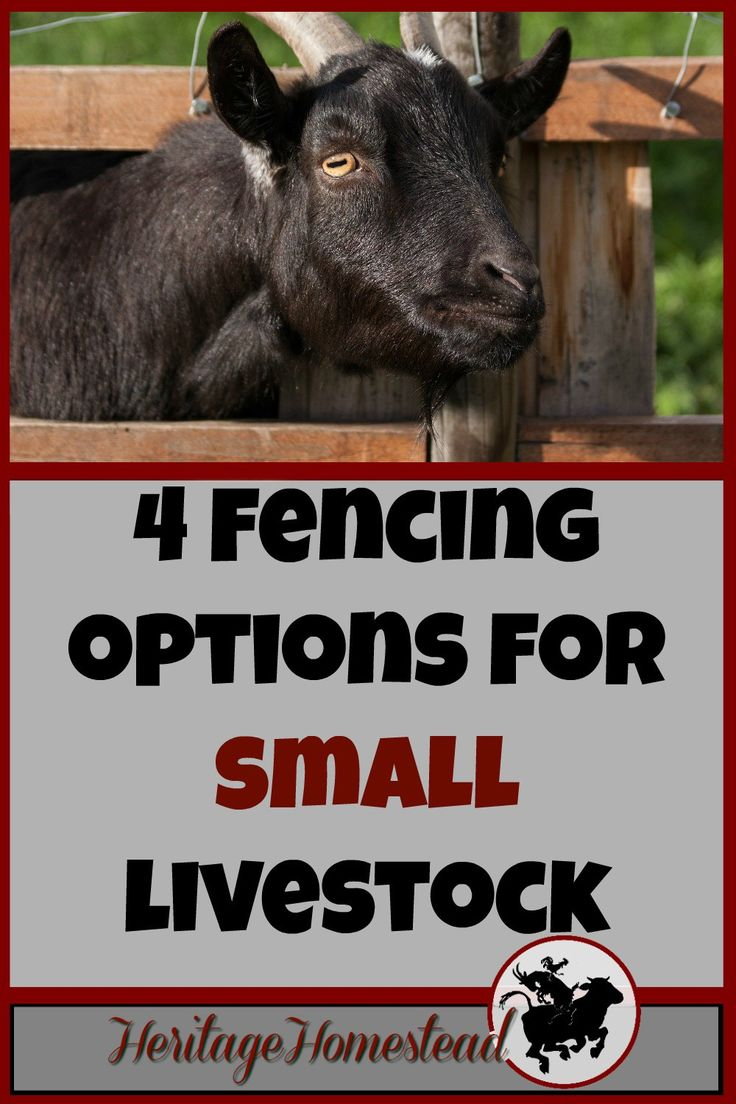 Fencing | Livestock | Fencing for small animals | Goats | Fencing for Goats: One of the four options may just be the perfect solution for you and your goats! Check out your options!