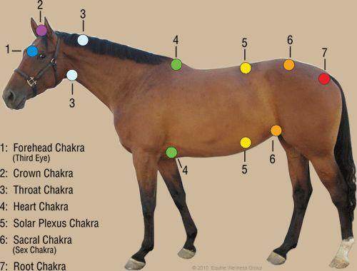 horse chakras