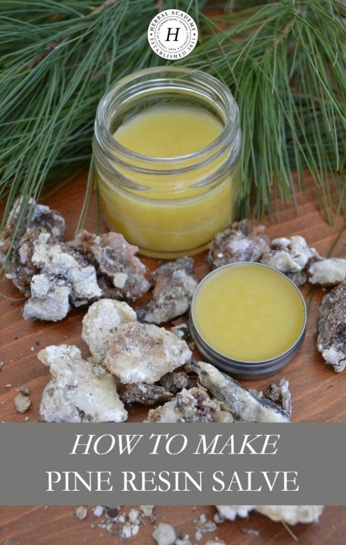 How To Make Pine Resin Salve | Herbal Academy | Did you know pine resin has been used historically for topical wound care? Learn how to make pine resin salve for your first aid kit!