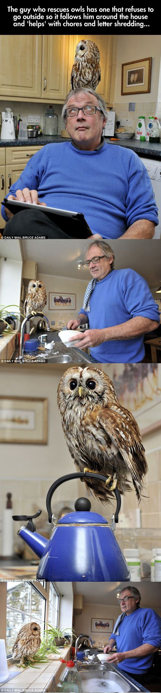The owl and the man seem pretty cool.