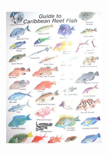 Coral reef fish names ms squared marine biology research for 7 fishes list