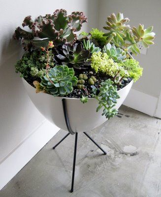 Love this potted indoor plant arrangement... I have to find one of these pots.