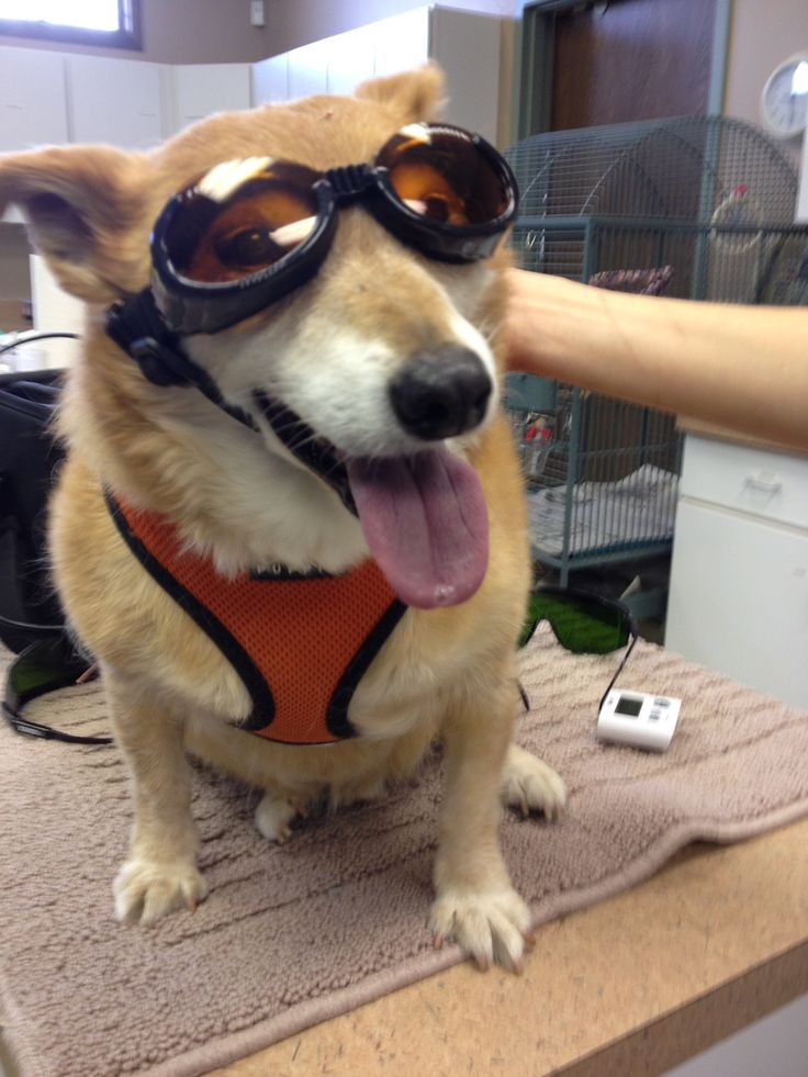 1000 Images About Rehab Services Offered At Natural Pet
