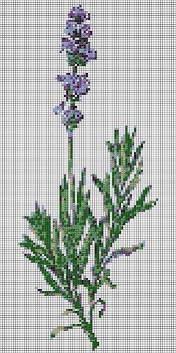 https://picasaweb.google.com/107956019071775817788/LAVANDAS  an album with lavender cross-stich schemes