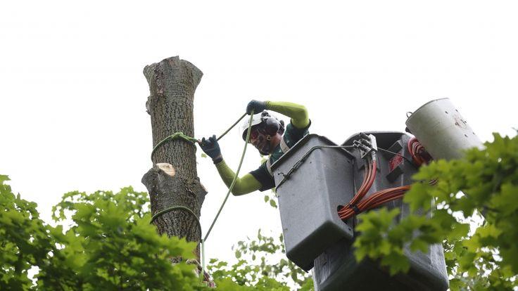 Tree Service – DIY Job or Call the Experts #treeservice #treecutting