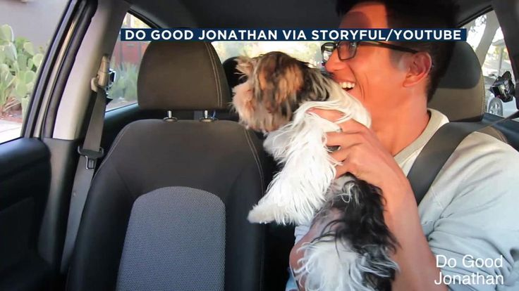 SoCal Uber driver surprises passengers with adoptable puppies   abc7.com