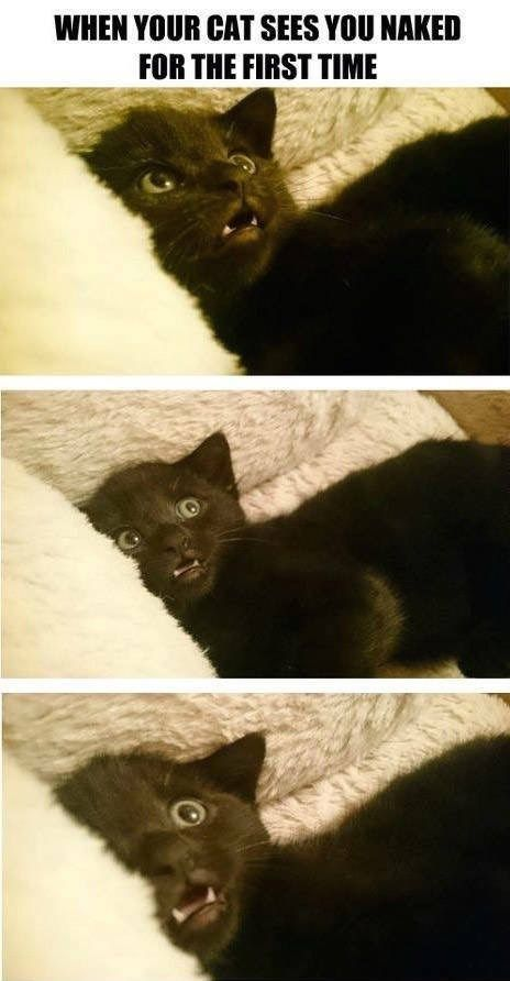 25 Cat Memes That'll Tickle Your Whiskers – Animal…