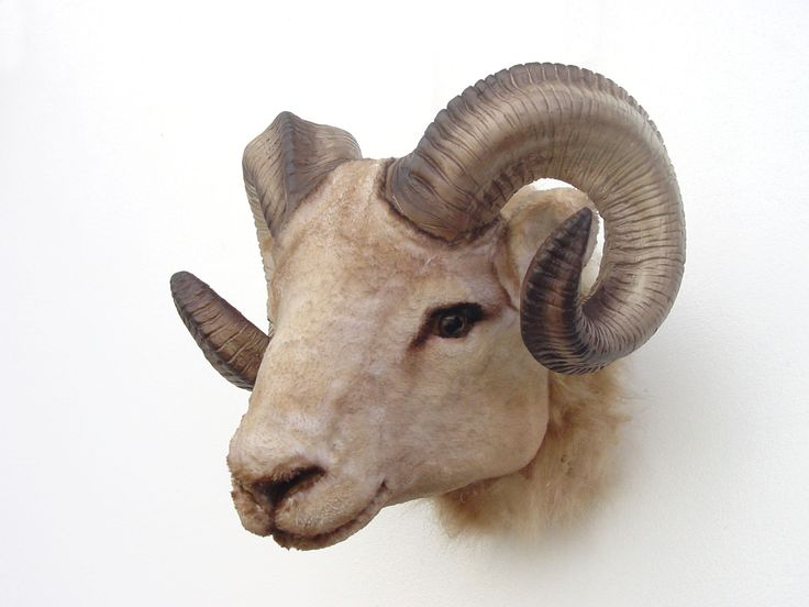 Ram Animal Ram Animal Head Fiberglass
