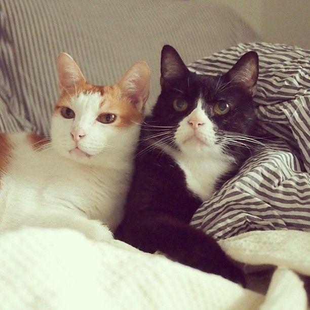 Photo by katetsai - they look like my cats, Bono & Yugi