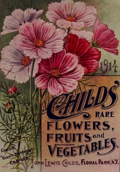 Childs' rare Flowers, Fruit and Vegetables,  1914 catalog with pink cosmos