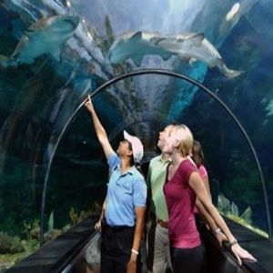 Top 5 Things To Do In San Diego California
