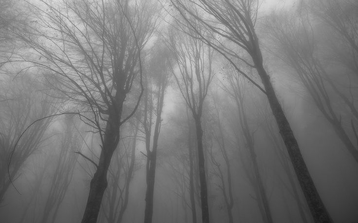 ATMOSPHERE - FORESTE CASENTINESI | MATTEO SIGOLO