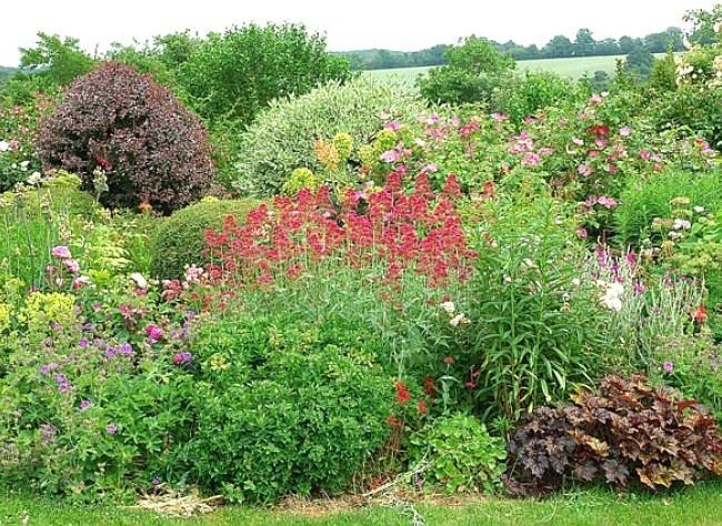 Vivaces qui poussent vite : valériane rouge, euphorbe, coquelourde, heliopsis, lavatère en arbre