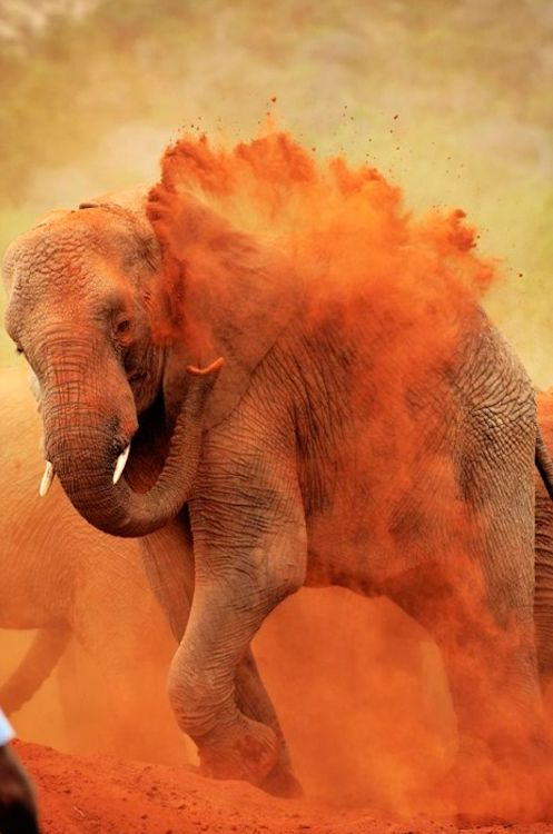 Dustbath! Elephants are constantly giving themselves dustbaths in order to stay cool from the heat! Maybe Letu students should give that a try!