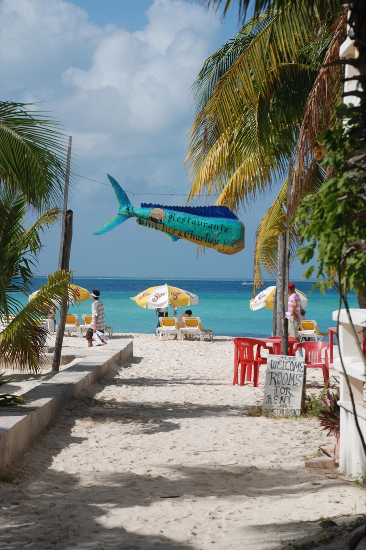 17 Best Images About Isla Mujeres Bars And Restaurants On
